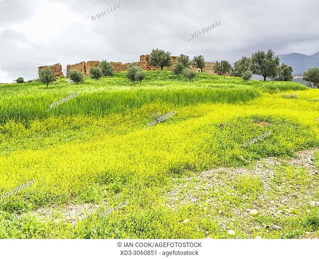 countryside near Ouzoud, Middle Atlas Mountains, Morocco