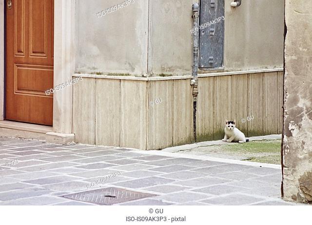 Portrait of a cat sitting in street, Pescara, Abruzzo, Italy