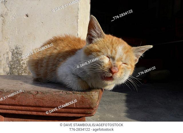 Complete contentment, cat in the ancient village of Xidi, Anhui, China