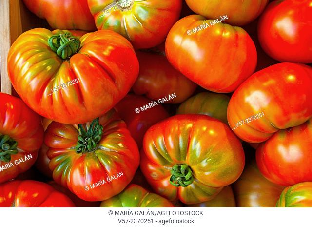 Tomatoes. Close view
