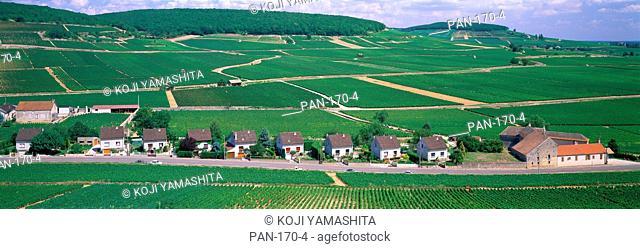 Rural Scene with Houses, Beaune, Bourgogne, France