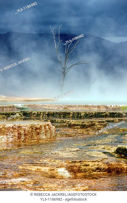 North America, USA, Wyoming, Yellowstone National Park, Mammoth Hot Springs  Terrace formed by thermophile bacteria