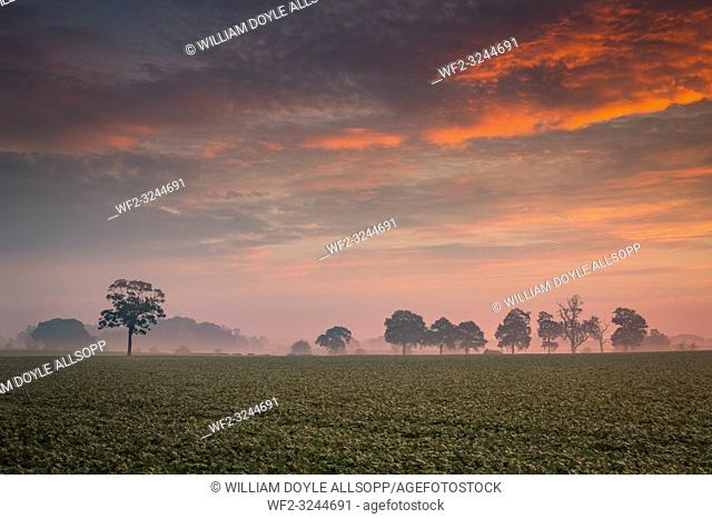 Sunrise over southern Staffordshire farmland