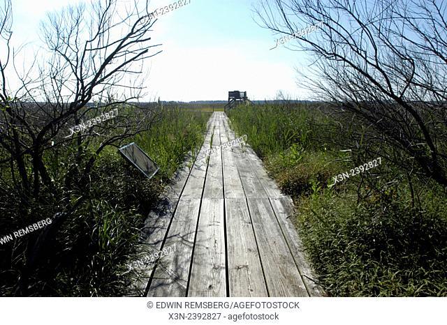 Boardwalk through marsh, Queen Anne's County Maryland