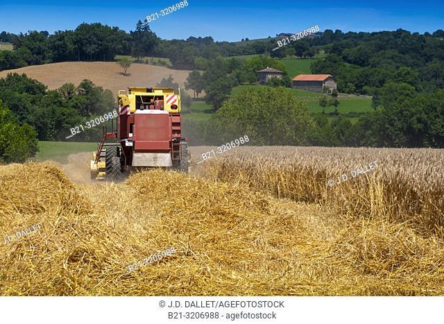 France, Auvergne, Cantal, Harvest at Saint Constant