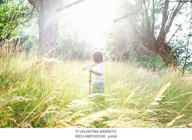 Little boy with wood stick standing on a meadow at backlight