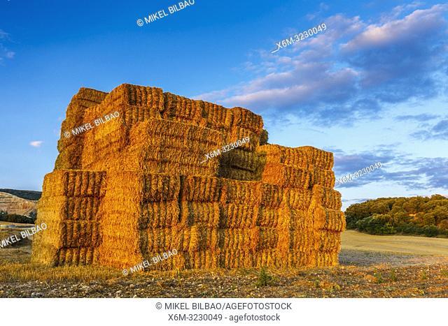 Wheat bales. Mendilibarri village (Ancin). Tierra Estella county. Navarre, Spain, Europe