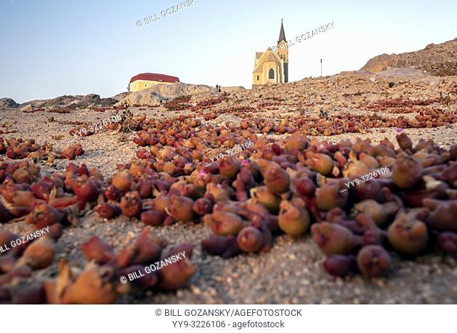 Blood finger (Mesembryanthemum cryptanthum) succulent growing near Felsenkirche - Church on the Rocks - Luderitz, Namibia, Africa