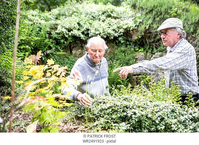 Two senior men in garden