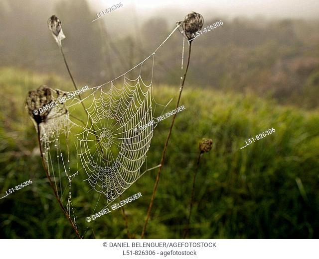 Spiderweb next to river Serpis, L'Orxa, Valencia, Comunidad Valenciana, Spain, Europe