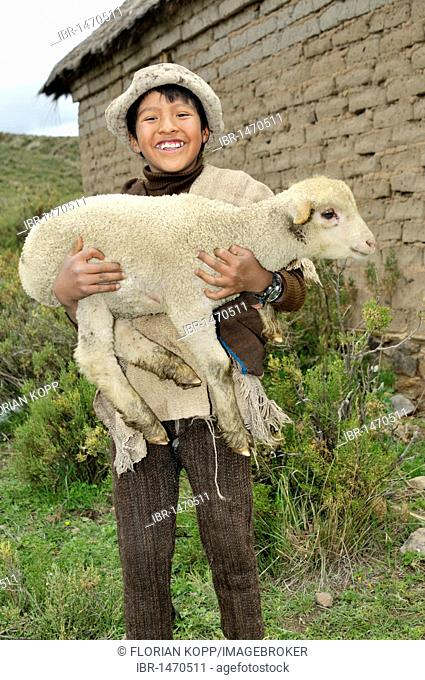 Shepherd boy carrying a lamb in his arms, Altiplano Bolivian highland, Oruro Department, Bolivia, South America