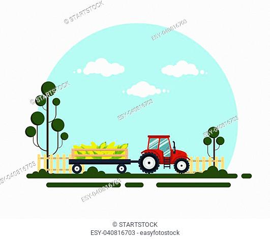 Flat red tractor with a cart corn. The agricultural machinery transports for farm with vagetables - vector illustration. Farming landscape