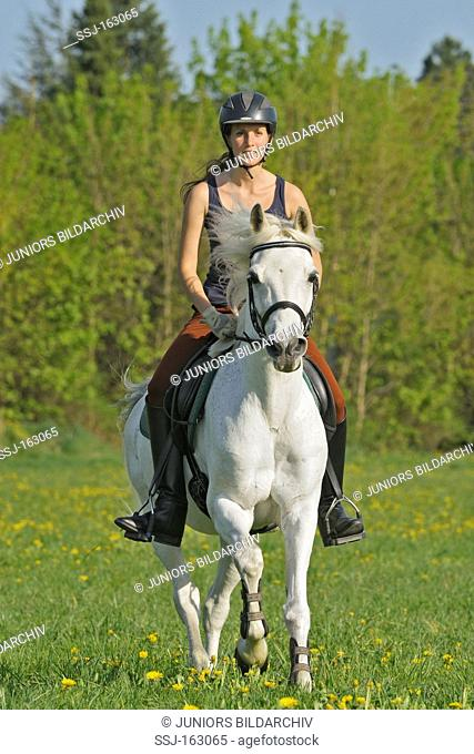 young woman riding on German Riding Pony horse