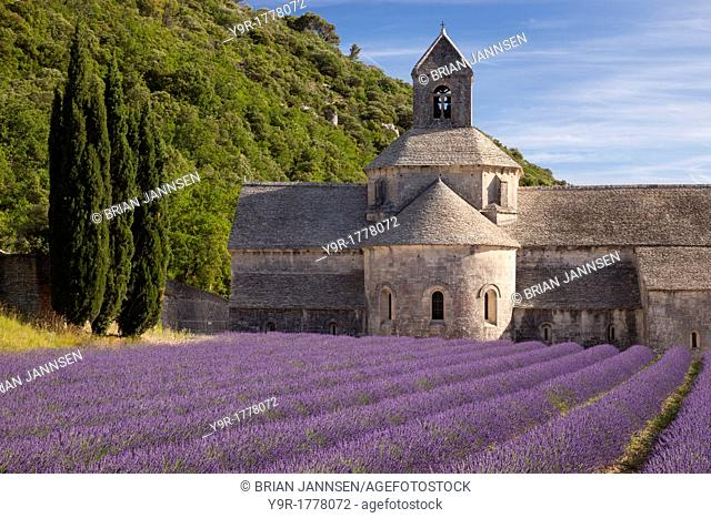 Rows of lavender leading to Abbaye de Senanque near Gordes in the Luberon, Provence France