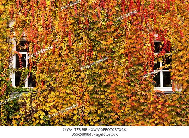 Germany, Hesse, Wetzlar, building covered with ivy, autumn