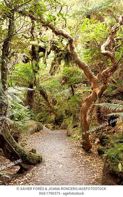 Track to Matai Falls near Papatowai, South Island, New Zealand