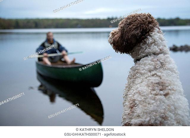 Dog Sitting on Deck with Man in Canoe on Lake in Background