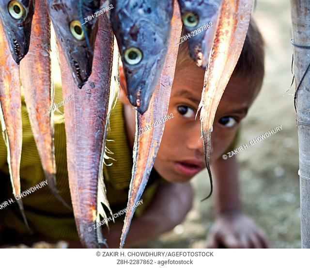 In Bangladesh about 7.3 million people live in the coastal fishing villages whose lead their living by fishing.Most of time they dry fish under sun;these dried...