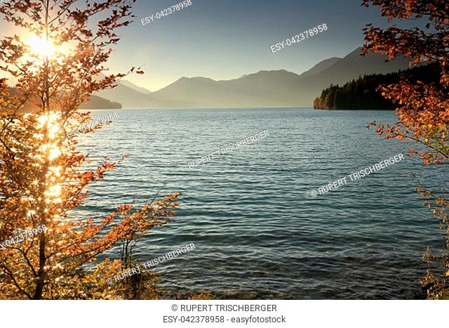 colorful trees on a lake in bavaria at autumn