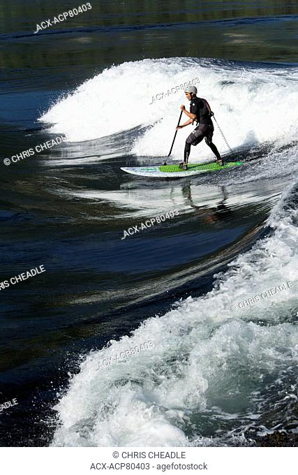 stand up paddleboarder on flood tide at Skookumchuck Narrows, Sechelt Inlet, Sunshine Coast, British Columbia, Canada
