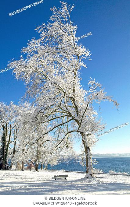Tree covered with snow at Lake Starnberg, Germany