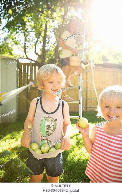 Portrait smiling family gathering apples in sunny backyard