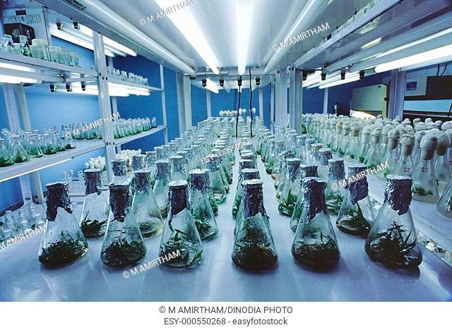 Tissue culture lab , India