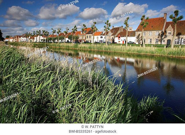 willow, osier (Salix spec.), Row of trees along the Damse Vaart, Belgium, West Flanders, Damme