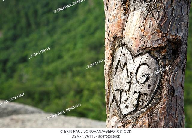 Initials carved in tree at Cathedral Ledge State Park in North Conway, New Hampshire USA