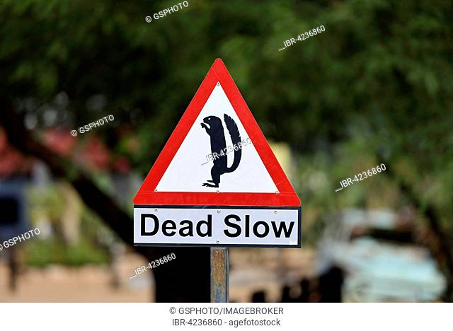 Warning sign for meerkats, Solitaire, Namibia