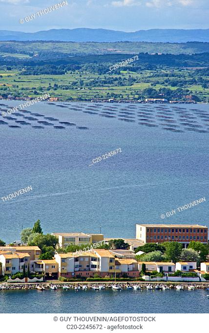 Oysters bed, in Bassin de Thau, seen from Sete, Herault 34, Languedoc-Roussillon region, France