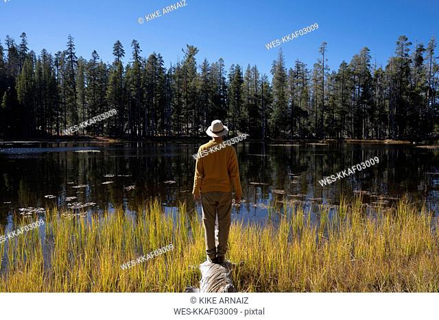 USA, California, Yosemite National Park, hiker standing on tree trunk in autumn