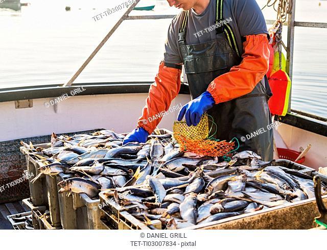 Fisherman packing fish