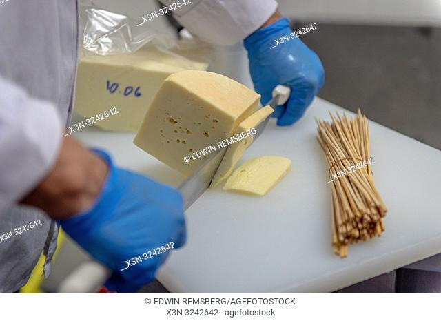 Man wearing latex gloves uses large cheese knife to cut freshly made soft cheese, Radom, Masovian Voivodeship, Poland