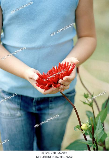 Girl holding a red flower