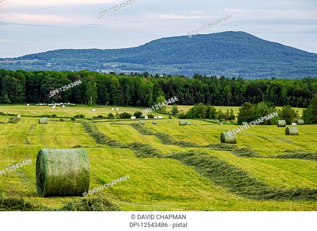 Round hay bales dispersed in a green farm field; Shefford, Quebec, Canada
