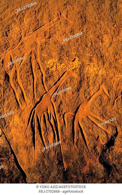 libya, akakus. morfology