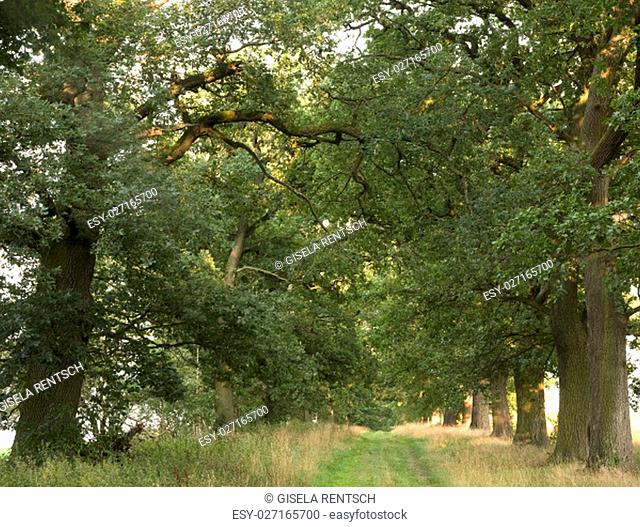 eichenallee at beberbeck,hessen,germany