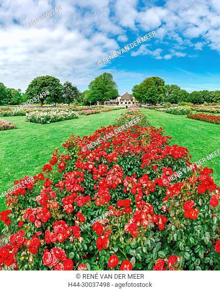 Rose garden Westbroekpark