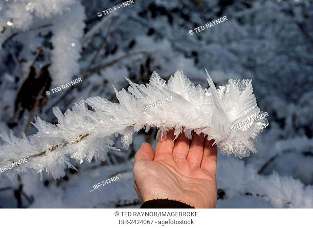 Hand touching ice crystals during cold spell at Lynx Creek, Alaska