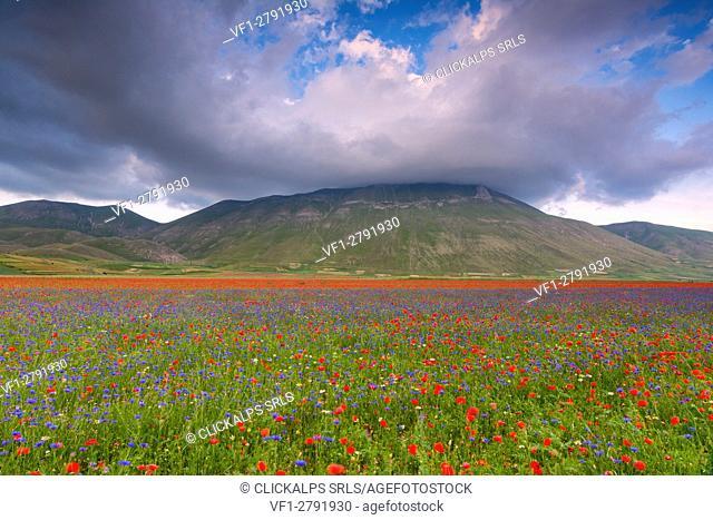 Europe,Italy, Umbria, Perugia district, Castelluccio of Norcia