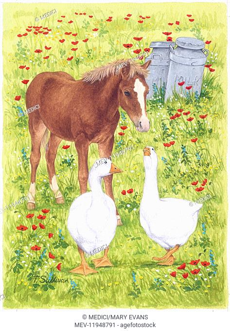 Pony and two Geese in a wild flower meadow, with two milk chums