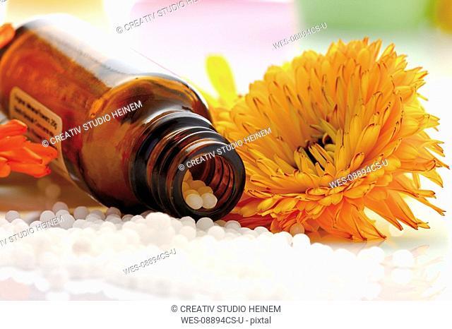Medicinal flask with pills in front of Marigold Calendula officinalis, close-up