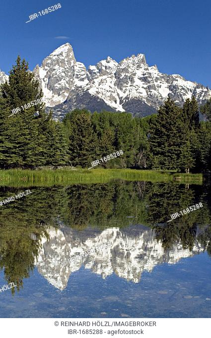 Beaver Lake near Schwabacher Landing, in the back the Teton Range, Grand Teton National Park, Wyoming, USA, America