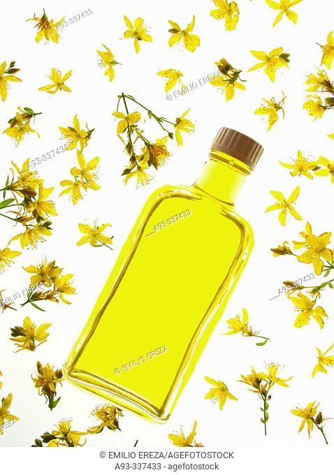 St. John's Wort (Hypericum perforatum) oil