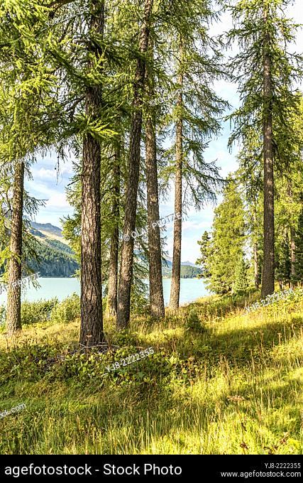 Look through Spring forest landscape at Lake Silvaplana, Engadine, Switzerland