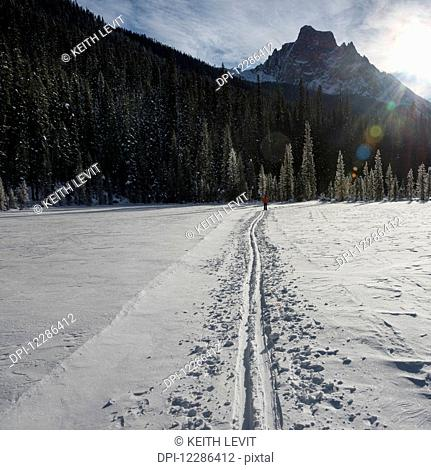 Cross-country skiing in Yoho National Park; Field, British Columbia, Canada