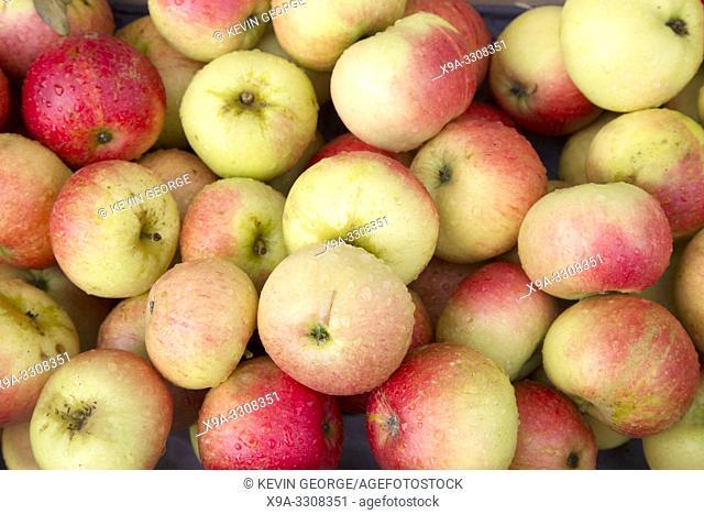 Close Up of Apple Fruit Background
