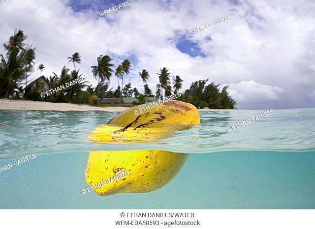 Coconut floats in Lagoon, Bora Bora, French Polynesia