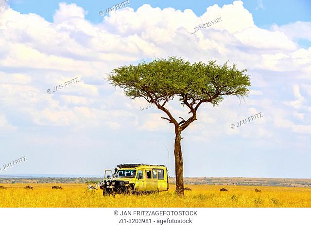 jeep under tree in empty savanna in mass mara, Kenia